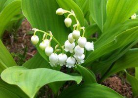 白(ホワイト)系の花がもたらす心理的効果